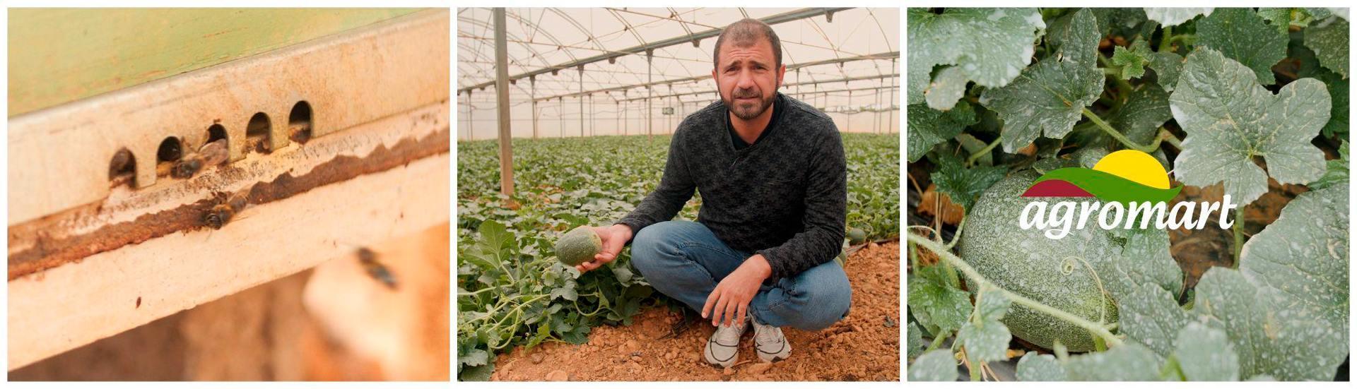 Melons Agromart